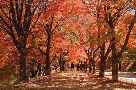 【入選】野村恵美 輝く紅葉の中で