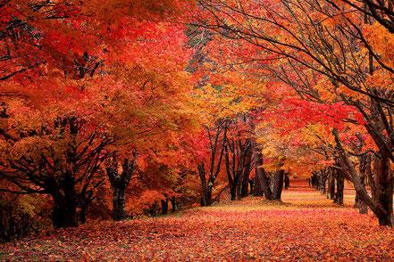 【入選】安坂静一「秋の彩り」