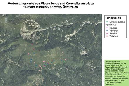 Vipera berus, Mussen, Gailtal, Lesachtal, Kärnten, Coronella austriaca