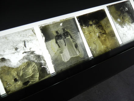 Glass plates of negatives