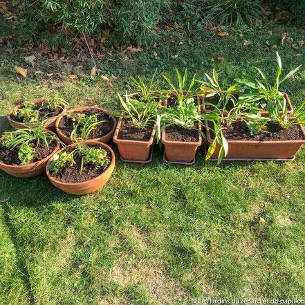 Jardinières bulbes printaniers et vivaces à la plantation en automne