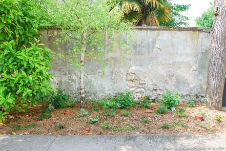 Côté entrée - Après : massif ornemental composé de plantes de sous-bois avec jeu de feuillages