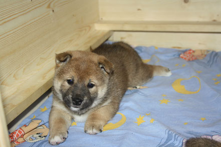 Benji - 5 Wochen alt
