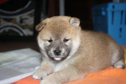 Baako - 5 Wochen alt