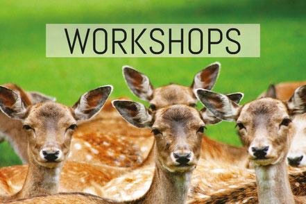Positionierungsworkshops - Marketingworkshops - Strategieworkshops