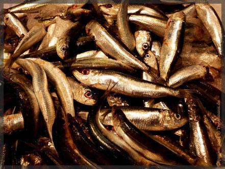 "Frischfisch bei ""Mercadona"""