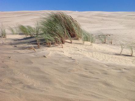 Dune du Pilat pres de chambres d'hôtes LES ARUMS