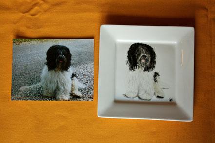 chien porcelaine