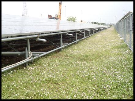 野立て太陽光発電のヒートアイランド現象を抑える