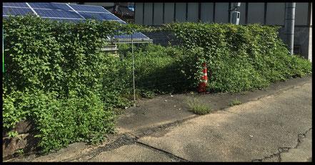 フェンスに巻き付く雑草