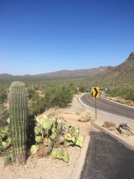 Tucson et ses cactus