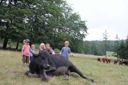 Wasserbüffel mit Kids (Führung zum Anfassen)
