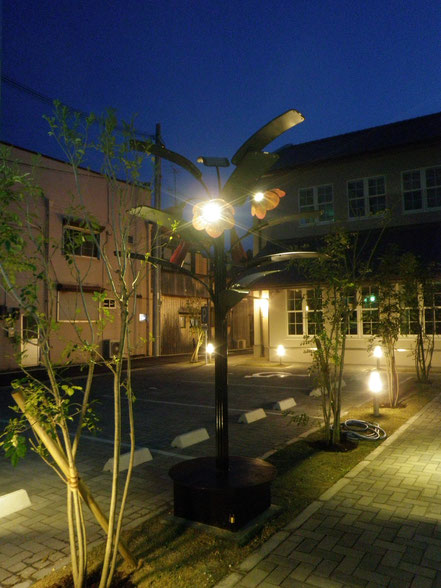 solar plants(ホウセンカ)夜