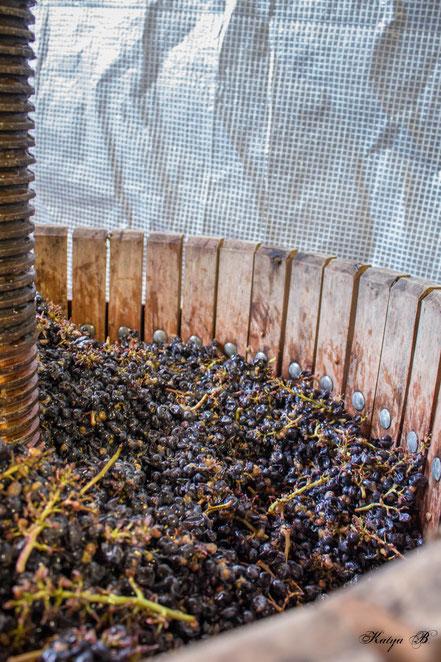 L'Arbre Viké Vin AOC Côtes de Toul Domgermain Jan Tailler