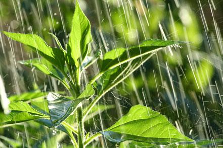 mesurer les chutes de pluie avec un pluviometre distribué par Agralis