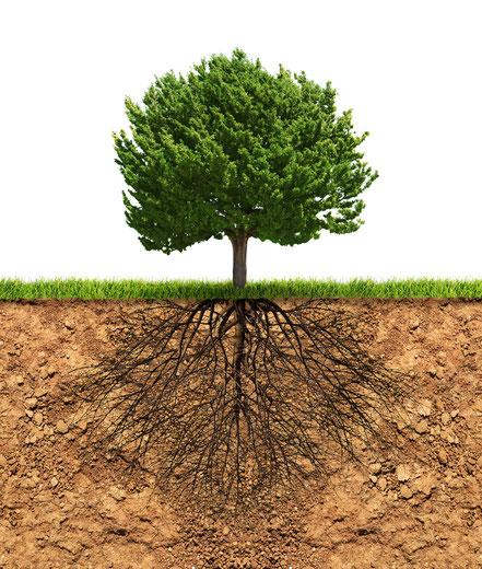 Etude compaction des sols et profil racinaire - pénétromètre AGRALIS