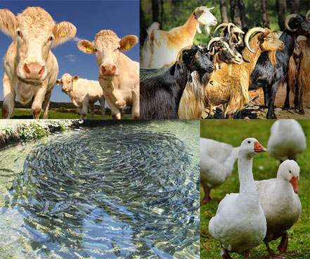 régulation des températures pour les élevages - capteurs Agralis