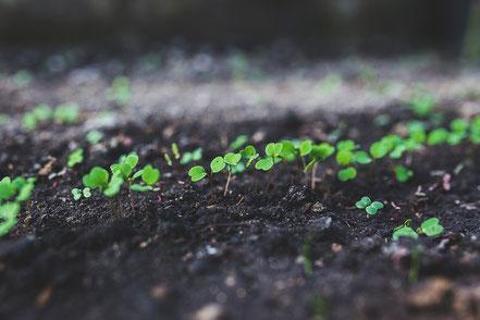 la recherche agronomique utilise des capteurs pour l'étude des plantes - Agralis