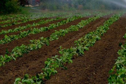 Capter l'humidité du sol pour optimiser l'irrigation avec Agralis