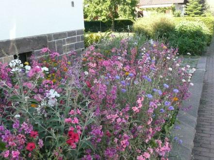 Wildblumenwiese im Vorgarten