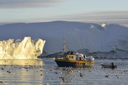 Fischer unterwegs im Eisfjord