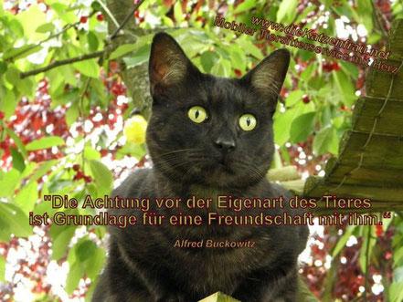 Mobile Tierbetreuung Saarland - die Katzenfrau