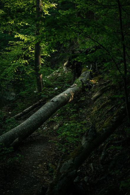 Teufelsklinge Heubach, Stift und Linse, Heubach, Wanderung, wandern, Natur