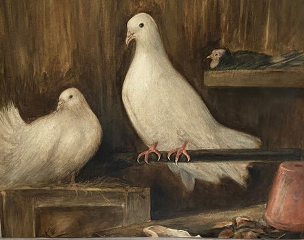 White doves in a barn 1911