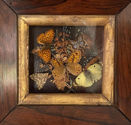 A mini Diorama of Butterflies amongst Flowers