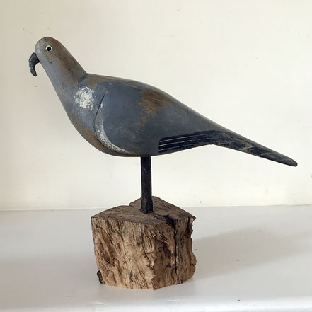 Good British decoy pigeon
