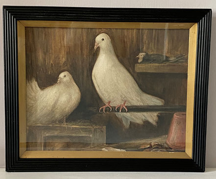 White doves in a barn 1911