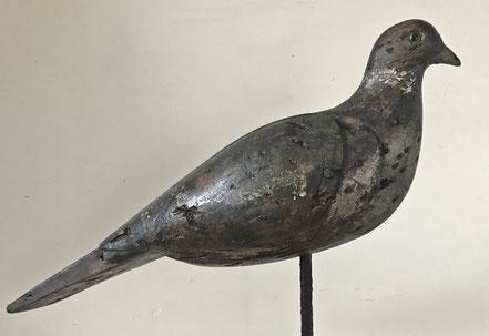 Good British decoy pigeon