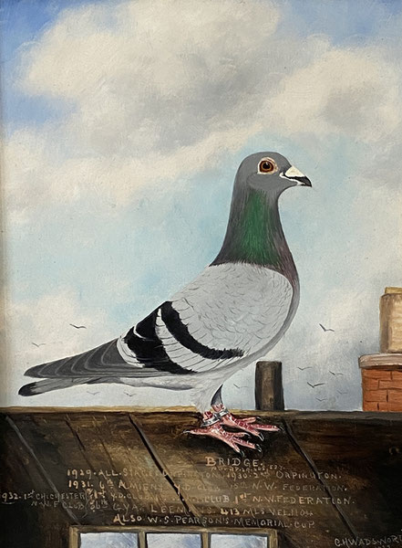 Racing pigeon oil portrait by C H Wadsworth 1933