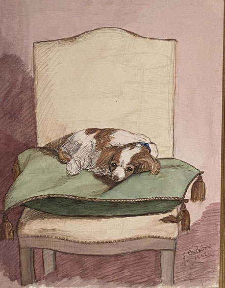 Dolly the well loved Spaniel Dozing on her Chair