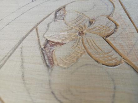 Detailansicht einer Blüte des Druckstocks