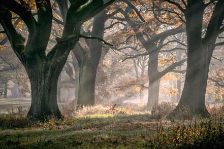 Landschaftsfotografie, Bäume