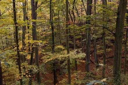 Landschaftsfotograf Deutschland, Nationalpark Harz, Stecklensberg