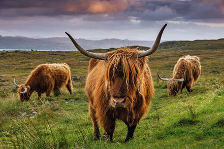 Auf grosser Reise in Schottland mit deiner Kamera