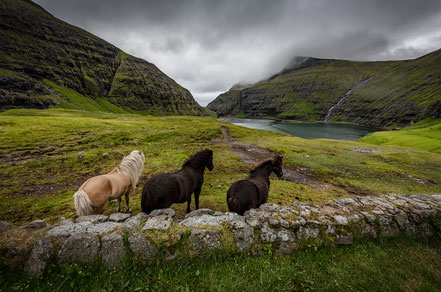 Landschaftsfotograf Sebastian Kaps aus Deutschland, Färöer, drei Pferde in Saksun