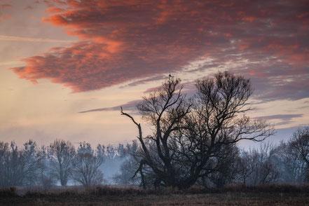 Landschaftsfotografie, Bäume, Abendrot