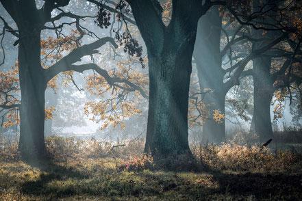 Bäume, fotografiert bei einer meiner Fotoreisen