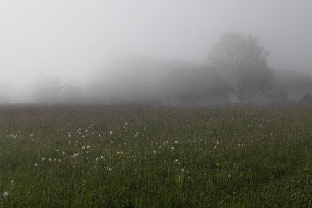 Nebel am Kap Arkona, Ruegen