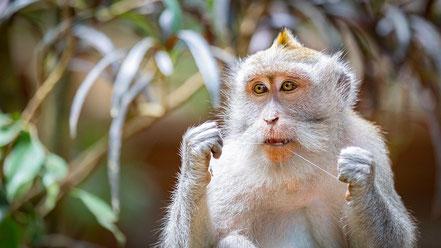 Motivator: als dit aapje het al kan... dan hebben wij ook geen excuus meer om het over te slaan!