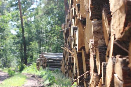 Holz, Holzverkauf, Wälder für Menschen