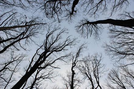Waldwirtschaft, Walddienstleistungen