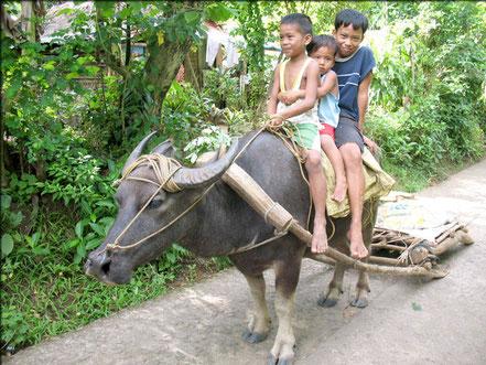 © 2.children.org. Quelle: http://www.rockefellernews.com/20570/carabao-croc-kills-2-in-philippines/
