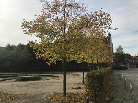 Der Cato-Bontjes-van-Beek-Platz in Kattenturm verändert sein Gesicht mit den Jahreszeiten, hier im Herbst 2018 (Foto: 11-2018, Jens Schmidt)