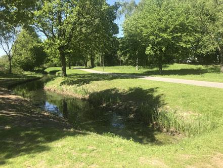 Röhricht am Krimpelsee in Bremen-Habenhausen