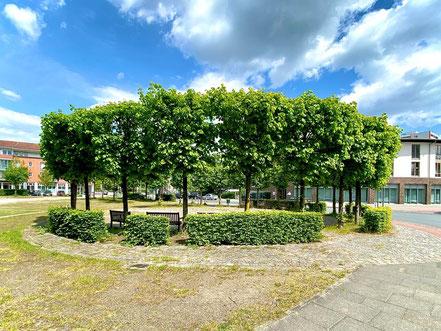Ein idealer Ort zum Verweilen: Das Lindenrondell direkt an der Straßengabelung Alfred-Faust-Straße / Theodor-Billroth-Straße (Foto: 05-2020, Jens Schmidt)
