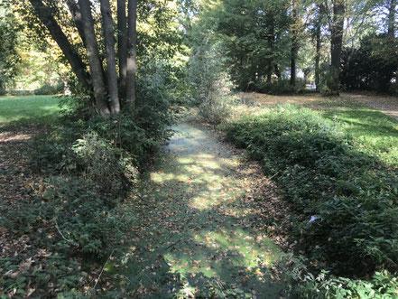 Der Teich im Wolfskuhlenpark wurde im Oktober 2018 zur Hälfte entschlammt